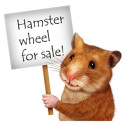Financial Security: Getting Off the Hamster Wheel